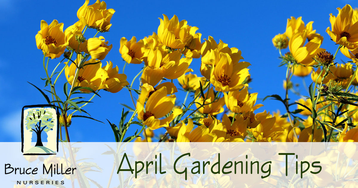 april gardening tips bruce miller nursery